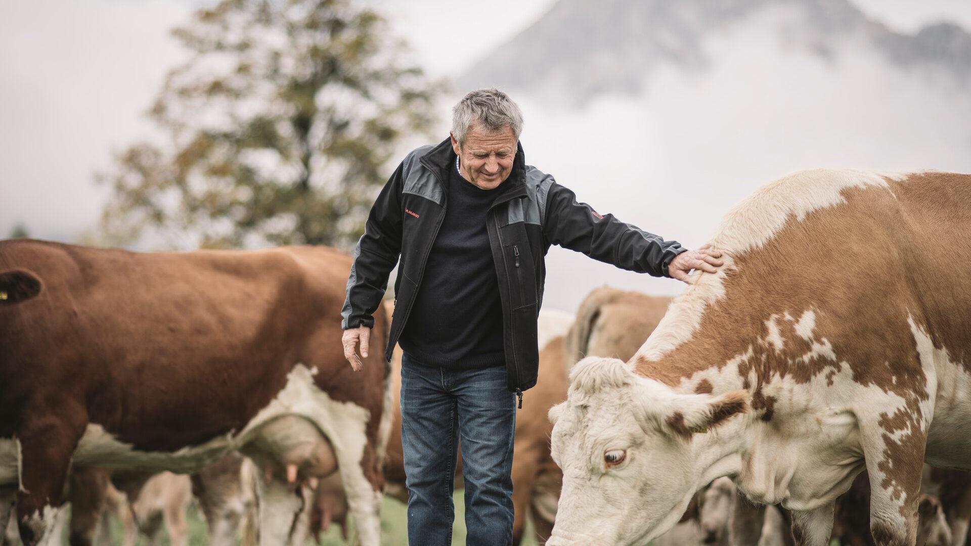 29 Jahre regionaler Leferpartner für Styria Beef